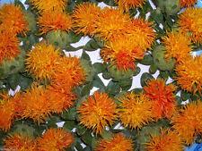 100 SAFFLOWER Seeds ,CARTHAMUS tinctorius,Dyer's Saffron (Hong-Hua) Organic !