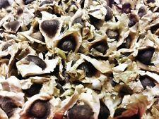 50 Organic Moringa Oleifera Seeds