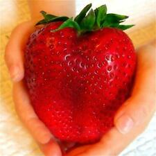 300pc Giant Strawberry Seeds Rare Fragaria Huge Fruit Green Gift Pop