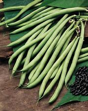 Vegetable - Climbing French Bean - Cobra - 40 Seed