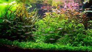 Lot pour aquarium de 100 plantes en 14 variétés + 4 clado gratuite