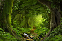 Tropical Jungle Rainforest Footpath Landscape Photo Art Print Poster 18x12 inch