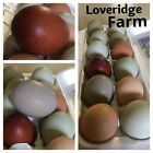 10+ Barn Yard Hatching Eggs Purebred Marans, Olive Eggers, Bantams Calico Cochin