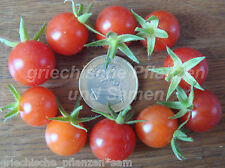 WORLDS SMALLEST Mini Tomate 10 Samen alte Sorte SEHR SELTEN Tomaten samenfest