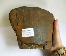 Plesiosaur dinosaur Humerus bone Abingdon Oxon 2704g 180mm ba237