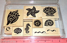 Stampin Up Definitely Decorative Shells Stamp Set Seashells Ocean Nautical Clean