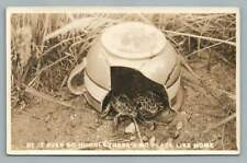 "Frogs Living in Broken Teacup ""Be It Humble~No Place Like Home"" Rppc Photo 1911"