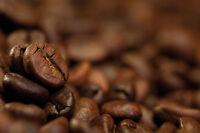 Tampa Bay Blend  una libra de cafe,  Fresh Roasted whole bean Coffee