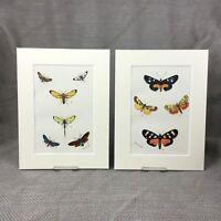 1897 African Moth Moths Butterflies Antique Victorian Chromolithograph Prints