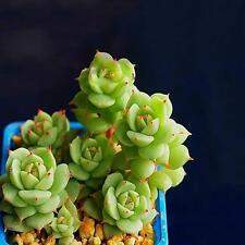 60pcs Succulents Rare Mini Potted Flower Seeds Home Office Decoratives 04# 1#