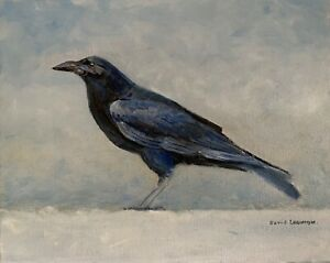 Crow. David Laurence original Oil on Canvas Board 10 x 8 ins