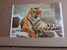 Postcard Tiger British Museum Card  unposted modern Card