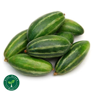 5 seeds of Pointed Gourd - TRICHOSANTHES DIOICA + GIFT 5 seeds of Sunflower