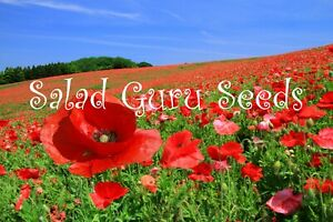Organic  Common Red Poppy 5000 Seeds - Papaver rhoeas Corn Field Wild Flower