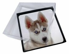 4x Siberian Husky Picture Table Coasters Set in Gift Box, AD-H54bC