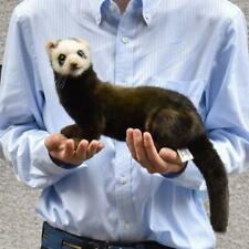 HANSA Stuffed Doll European polecat Animal Wild Plush Toy Collectible 7827