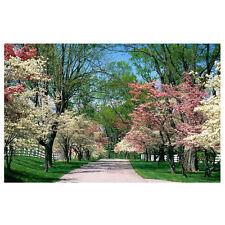 Thin Vinyl Photography Backdrop Spring Garden Photo Studio Background 7x5ft ED