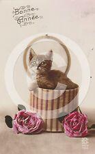 "RPPC of TABBY Cat KITTEN IN HAT BOX ""Bonne Annee (Happy New Year)"" REAL PHOTO"