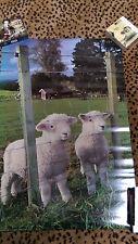 Baby Lambs / Lambies POSTER  24 x 36 Cute Baby Animals Lamb Farm Zoo Nature