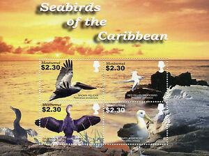 Montserrat Birds Stamps 2005 MNH Seabirds of Caribbean Pelicans Albatross 4v M/S