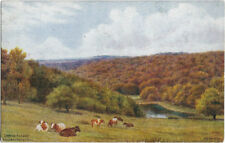 ESSEX: Epping Forest from Baldwin's Hill  - A.R.QUINTON - SALMON *1569