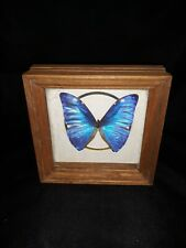 Vintage Real Insect/Butterfly/Moth Rare Blue Morpho didius Peru by Chuck