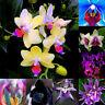 150Pcs Gemischte Farbe Orchidee Samen Bonsai Zier Pflanze Blume Garten-