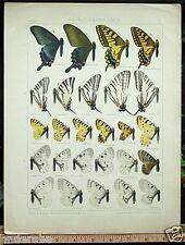 RARE Seitz 1912 PAPILIO/PARNASSIUS Butterflies OUTSTANDING COLOR PLATE P3 L@@K!!