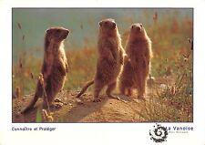 BT9207 jeunes marmottes marmota france vanoise  marmot  animal animaux