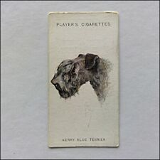John Player Dogs 44 Kerry Blue Terrier Cigarette Card (Cc11)