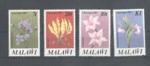 (870164) Flowers, Orchids, Malawi