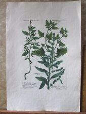 "Vintage Engraving,ATRIPLEX,Goosefoot,C1740,WEINMANN,Botanical,20x13.5"",Mezzotint"
