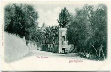 Primi '900 Bordighera via Romana palme strada alberi FP B/N