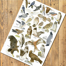 A3 British Birds of Prey and Owls Identification Chart Wildlife Poster