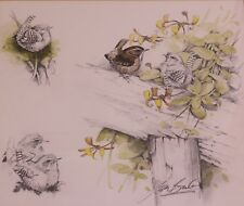 Signed Ian Bowles (Wildlife Artist) Watercolour WRENS in Hedgerow
