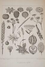 GRANDVILLE-FLEURS ANIMEES-GRAVURE  BOTANIQUE PLANCHE 2 1852 PRINT