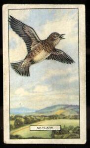 Tobacco Card, Gallaher, BRITISH BIRDS, 1937, Skylark, #1