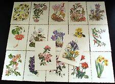 AK 17 Künstlerkarten Blumen von Anne-Marie Schwarz-Torinus + 4 alle abgebildet