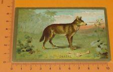 CHROMO BON-POINT IMAGE ECOLE 1900-1914 ANIMAUX CHACAL