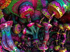 Art Print Poster Painting Drawing Psychedelic Magic Mushrooms Weird Nofl0063