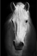 Framed Print - White Horse Standing in the Darkness (Picture Poster Animal Art)