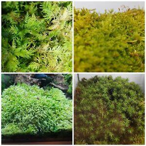 Moos, 4 Sorten 25×35cm, Deko Moos, Bastelmoos,Terrarium Pflanzen, Moos, lebend
