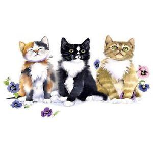 Pansy Kittens   Cat  Sweatshirt/Longsleeved Tshirt    Sizes/Colors
