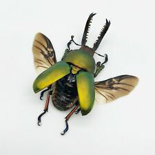 Saw Tooth Green Stag Beetle (lamprima adolphinae) (SPREAD) (LARGE) Insect