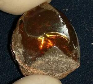 51.05 Carat Ethiopian Chocolate Shewa Rough Opal #5270810016