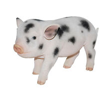 Vivid Arts - PET PALS WILDLIFE PET & MICRO PIG BOX - Pink Spot Micro Pig