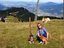 Bach-Blüten für die Hundeseele von Marion Brehmer (2004, Gebunden)