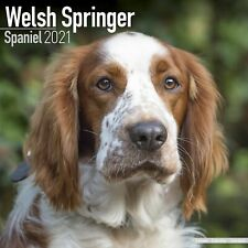 Welsh Springer Spaniel Calendar 2021 Premium Dog Breed Calendars