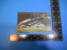 Vintage Marineland Florida Mother & Baby Porpoise Post Card Pc2