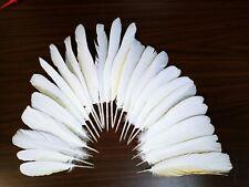Ckackatoo feathers(macaw)